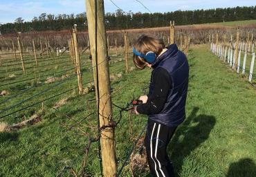 Lachlan helping with pruning in the holidays