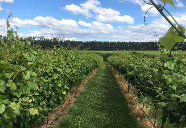 Valleyfield Vineyard